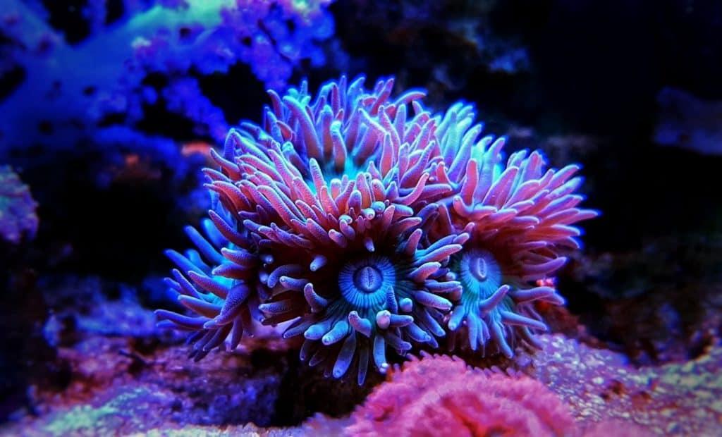 koraal beginners