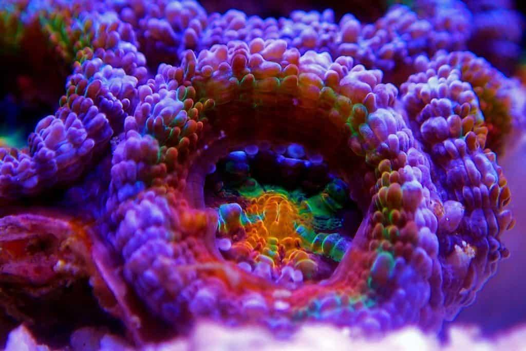 koraal veel kleuren aquarium