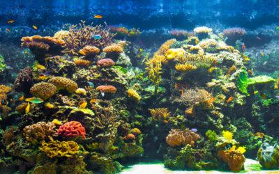 Heb je last van cyanobacteriën of dinoflagellaten